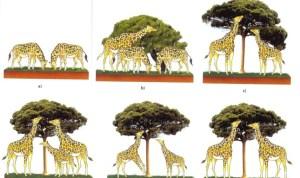 girafas_lamarck2-e1424021926132