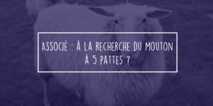 mouton-690x345