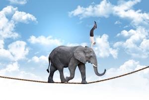 elephant-agile@w_720