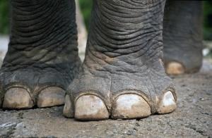 Elephant feet.